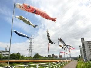 天白川沿い 鯉のぼり
